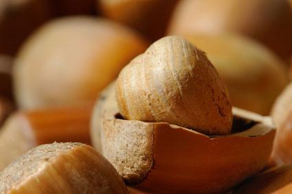 instants mieux-être - Envie de grignoter : mangez des oléagineux